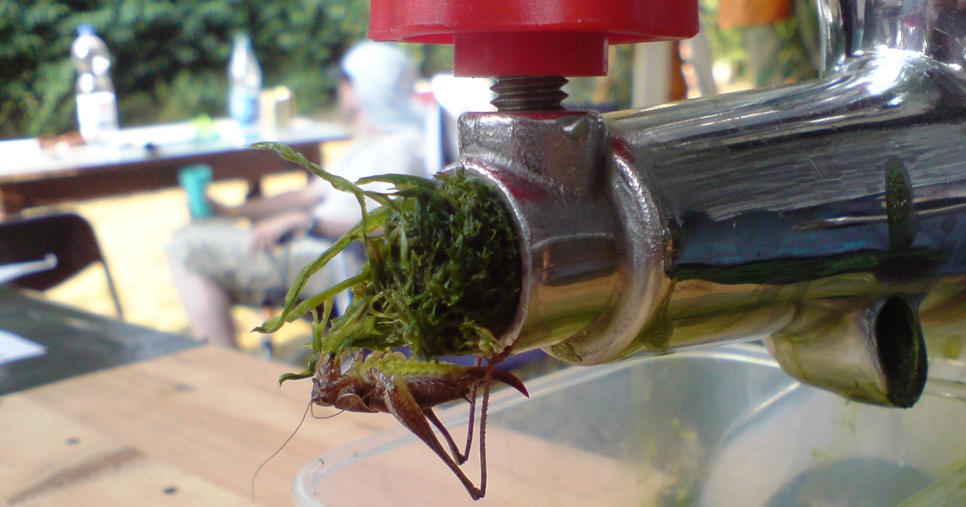 Weizengras-Chlorophylgehalt
